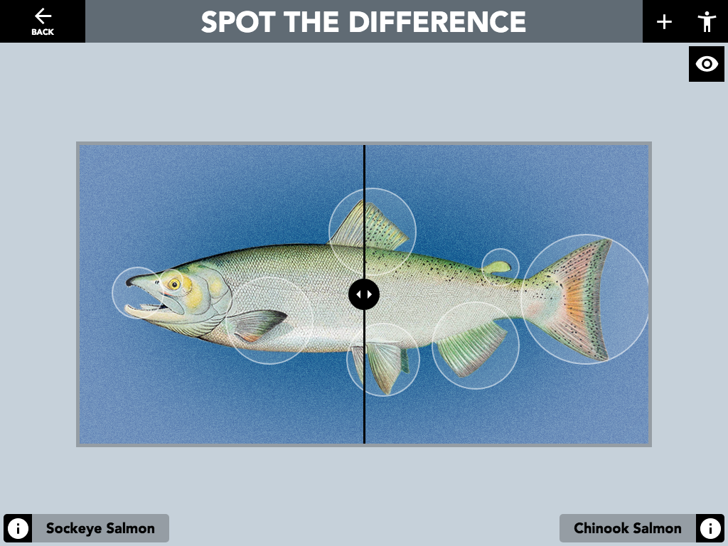 "Figure 6: Spot The Difference ""Compare Image"" activity. A ""hint"" button can be enabled that allows users to reveal the hidden hot areas when touched."