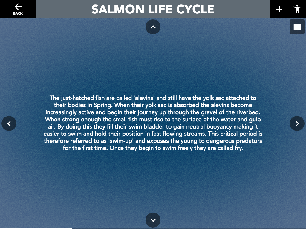 "Figure 12: Salmon Life Cycle ""Slideshow"" activity- basement slides exist beneath slides so users can navigate down to read more in-depth information about the slide they have selected."