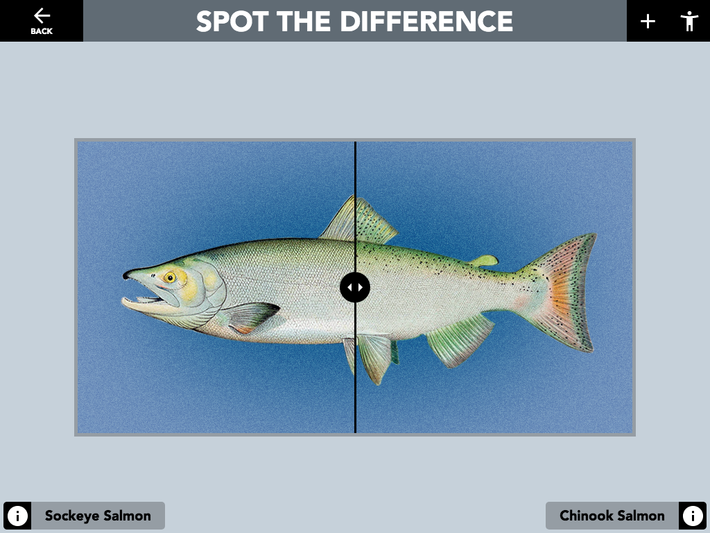 "Figure 5: Spot the Difference ""Compare Image"" activity. Invisible hot areas can be configured to open full screen informational pop-ups when touched. In this example, dragging the slider over the image reveals the visual difference between the Sockeye and Chinook salmon."
